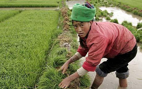 china-farmer-460_1008437c