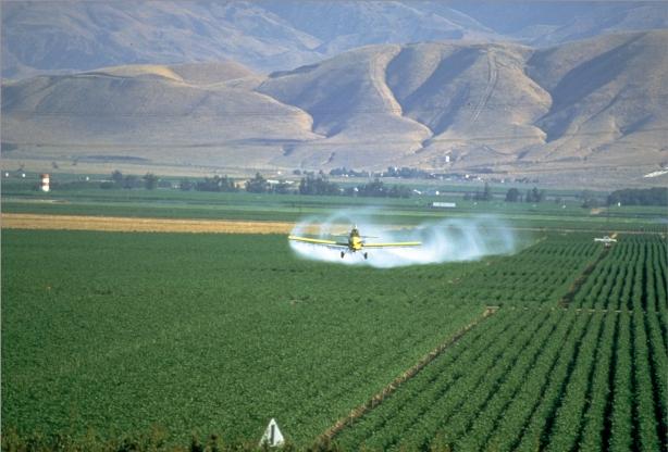 spray-2_98360